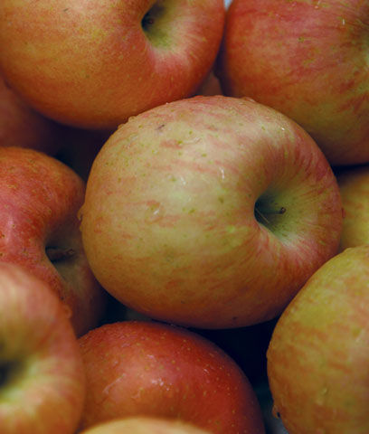 malus-norland-apple