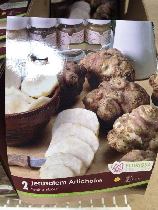 artichoke-jerusalem-bulb-florissa