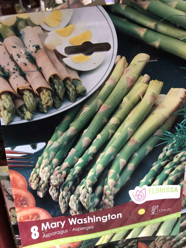 asparagus-mary-washington-bulb-florissa