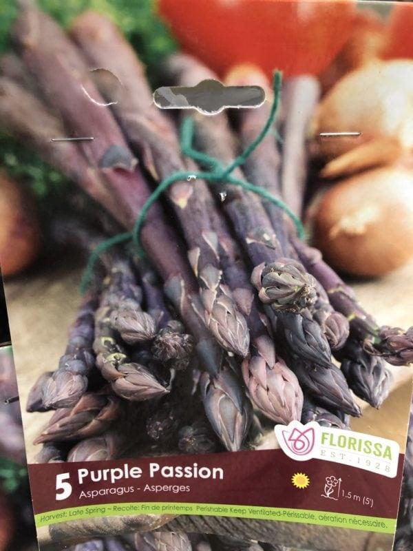 asparagus-purple-passion-bulb-florissa