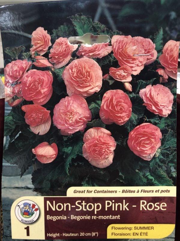 begonia-non-stop-pink-bulb-florissa