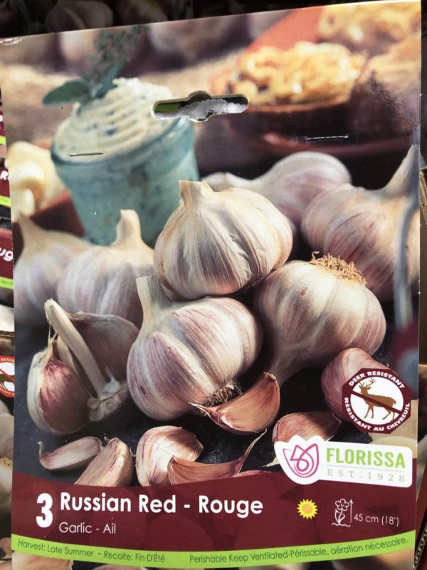 garlic-russian-red-bulb-florissa