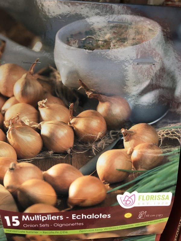 onion-sets-multipliers-bulb-florissa