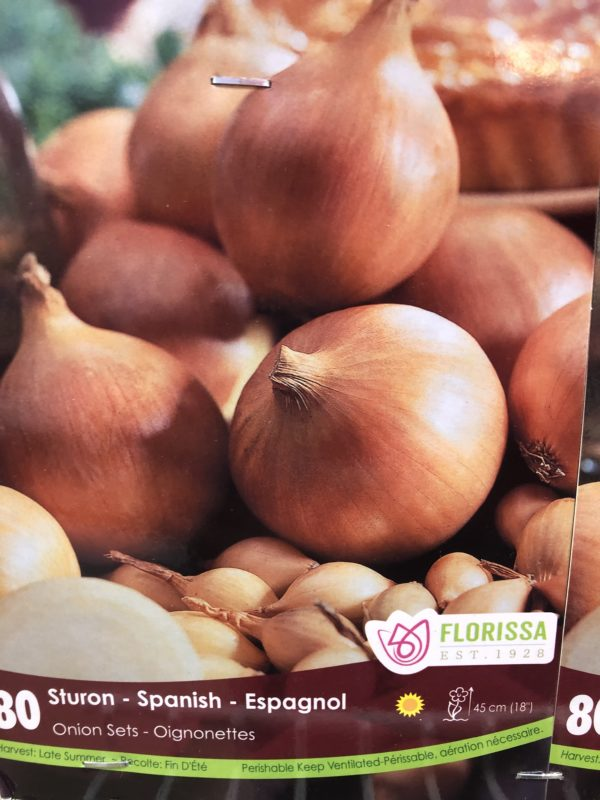 onion-sets -sturon-spanish-bulb-florissa