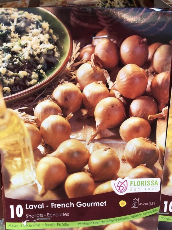 onion-shallots-laval-french-bulb-florissa