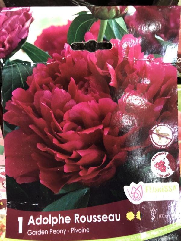 peony-adolphe-rousseau-bulb-florissa