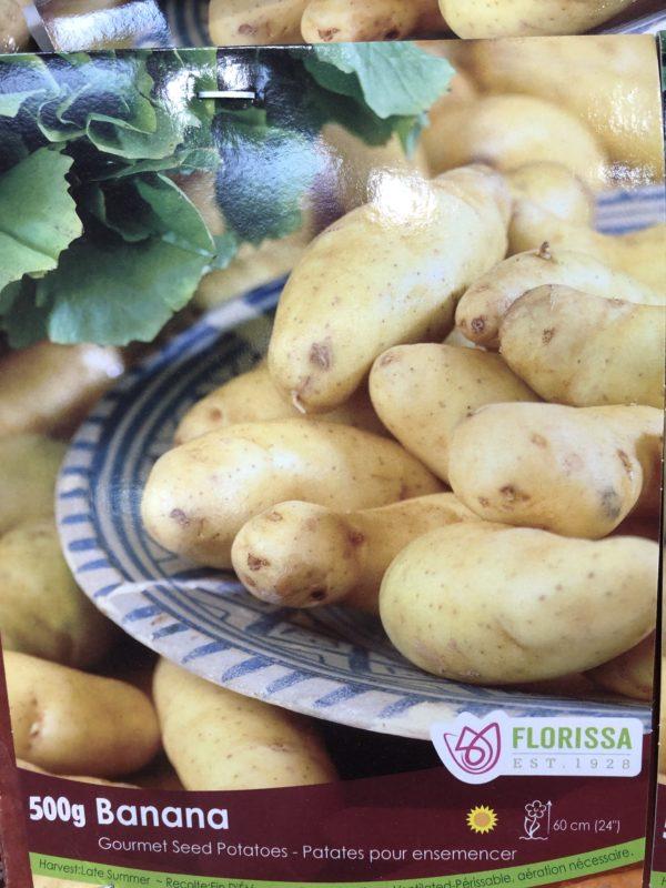 potatoes-banana-bulb-florissa