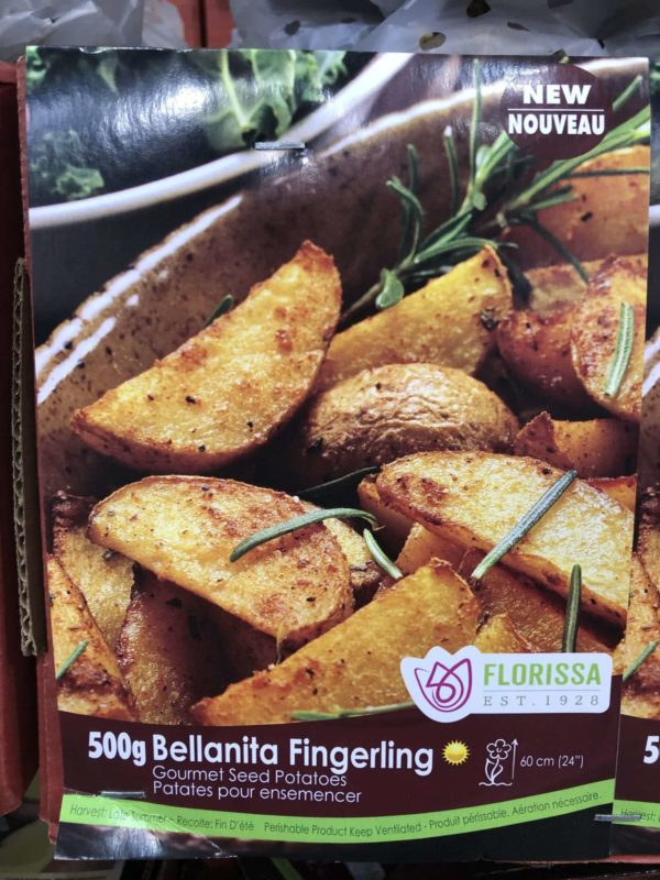 potatoes-bellanita-fingerling-bulb-florissa