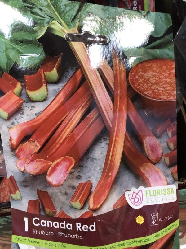 rhubarb-canada-red-bulb-florissa