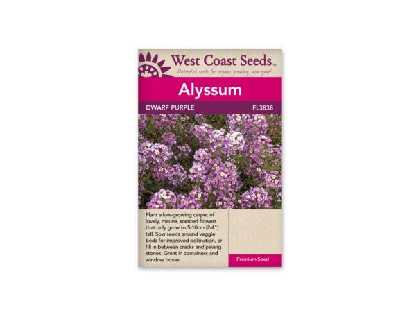 alyssum-dwarf-purple-west-coast-seeds