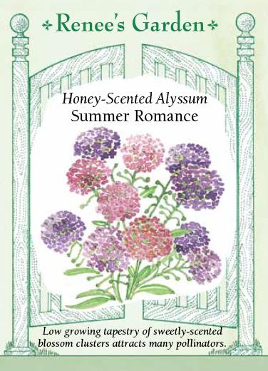 alyssum-honey-scented-summer-romance-renees-garden