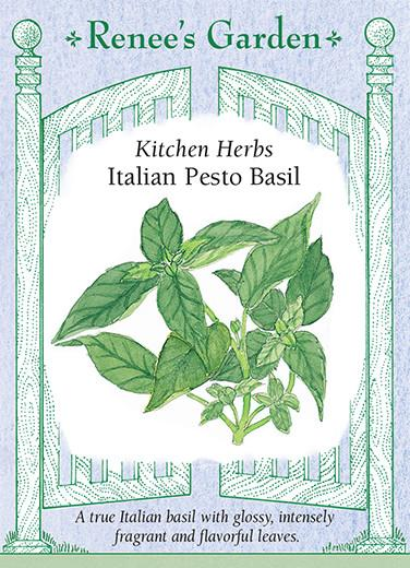 basil-kitchen-herbs-italian-pesto-renees-garden