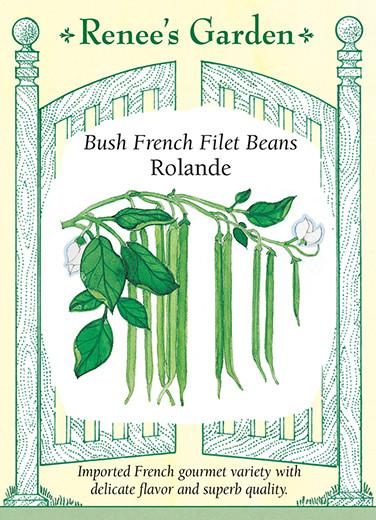 bean-bush-french-filet-beans-rolande-renees-garden