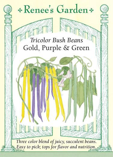 bean-tricolor-bush-beans-renees-garden