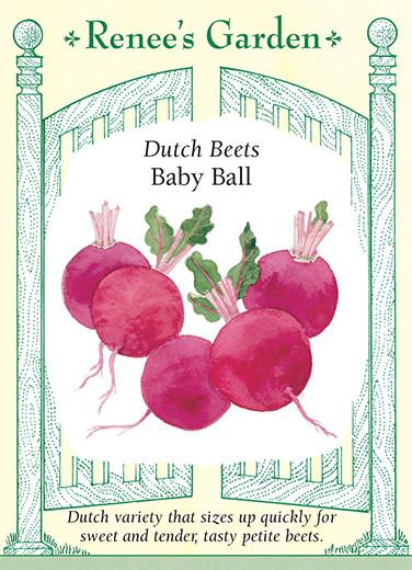 beet-dutch-beets-baby-ball-renees-garden