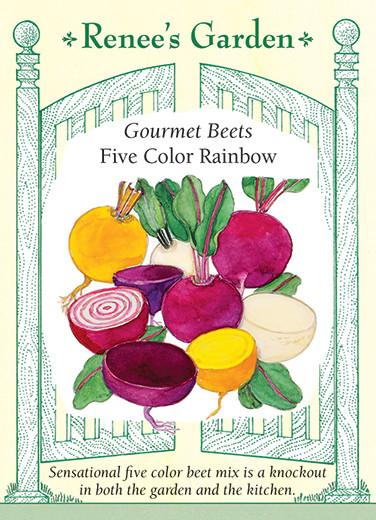 beet-gourmet-beets-five-color-rainbow-renees-garden