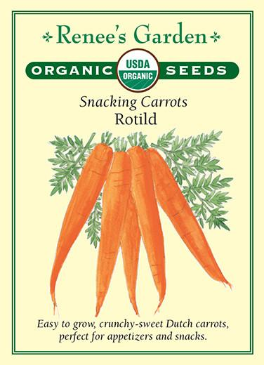 carrot-snacking-carrots-rotild-renees-garden