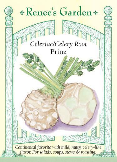 celeriac-celery-root-prinz-renees-garden