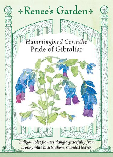 cerinthe-hummingbird-cerinthe-pride-of-gibraltar-renees-garden