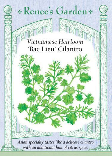 cilantro-vietnamese-heirloom-bac-lieu-renees-garden