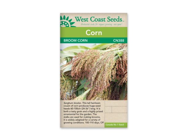 corn-broom-corn-west-coast-seeds