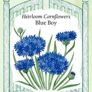 cornflower-heirloom-cornflowers-blue-roy-renees-garden