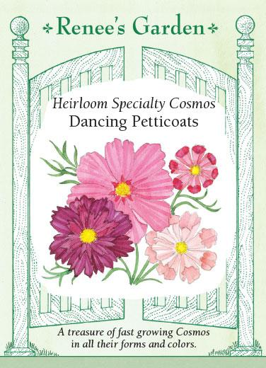 cosmos-heirloom-specialty-dancing-petticoasts-renees-garden