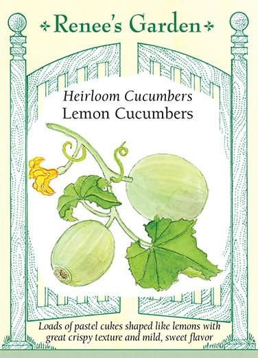 cucumber-heirloom-cucumbers-lemon-renees-garden