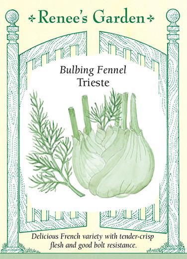 fennel-bulbing-fennel-trieste-renees-garden