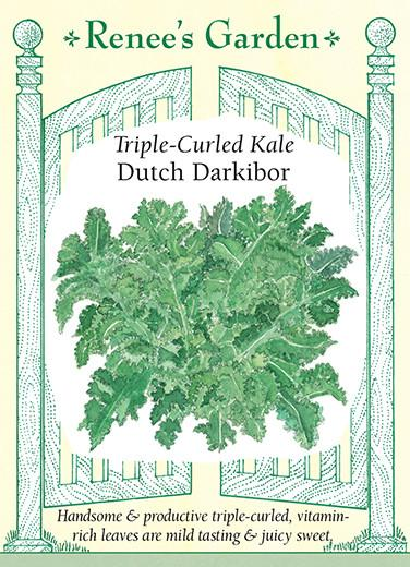 kale-triple-curled-kale-dutch-darkibor-renees-garden