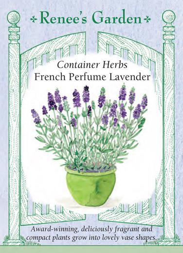 lavender-container-herbs-french-perfume-renees-garden
