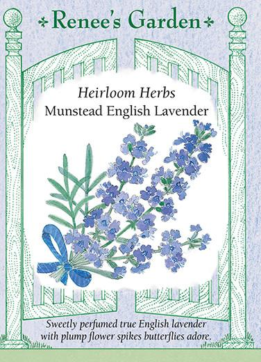 lavender-heirloom-herbs-munstead-english-renees-garden