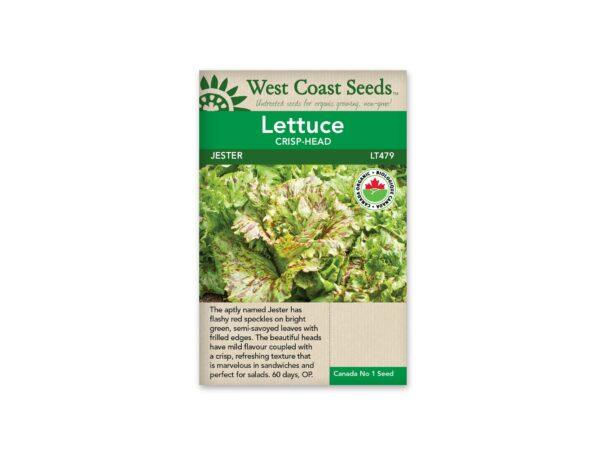 lettuce-crisp-head-jester-west-coast-seeds