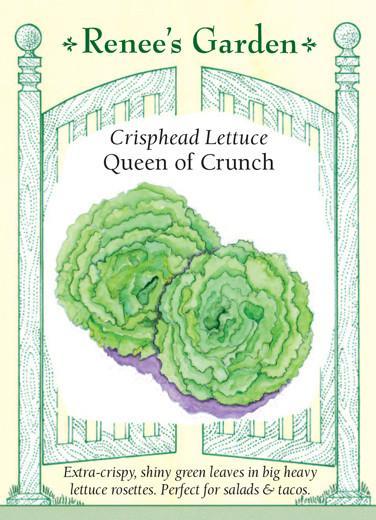 lettuce-crisphead-lettuce-queen-of-crunch-renees-garden