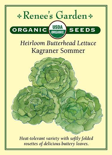lettuce-heirloom-butterhead-lettuce-kagraner-sommer-organic-renees-garden