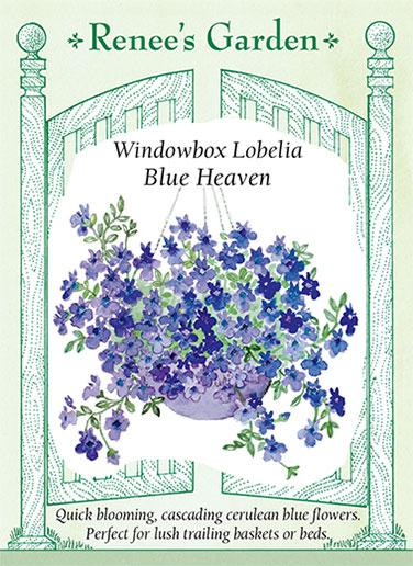 lobelia-windowbox-blue-heaven-renees-garden