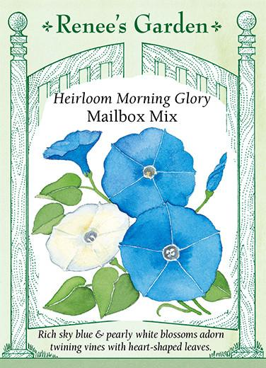 morning-glory-heirloom-mailbox-mix-renees-garden