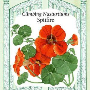 nasturtium-climbing-nasturtiums-spitfire-renees-garden