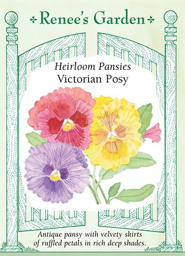 pansy-heirloom-pansies-victorian-posy-renees-garden