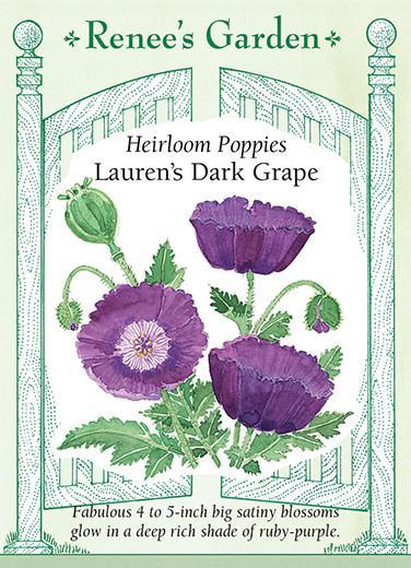 poppy-heirloom-poppies-laurens-dark-grape-renees-garden
