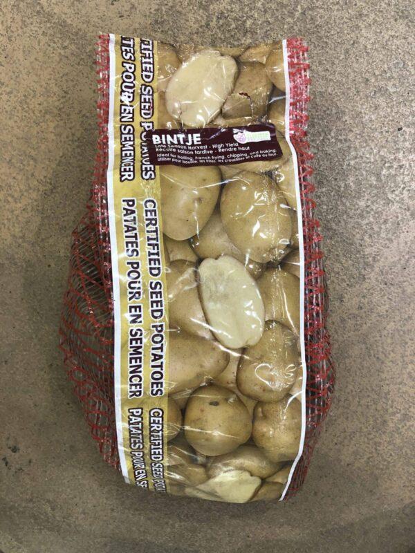 potato-seed-bintje-florissa-bulb