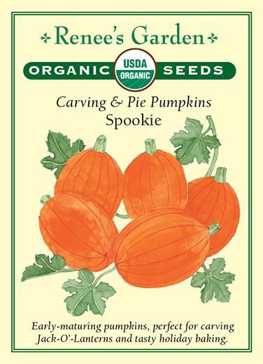 pumpkin-carving-pie-pumpkins-spookie-renees-garden