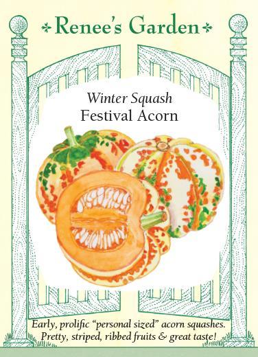 squash-winter-squash-festival-acorn-renees-garden