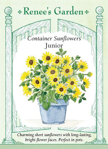 sunflower-container-sunflowers-junior-renees-garden