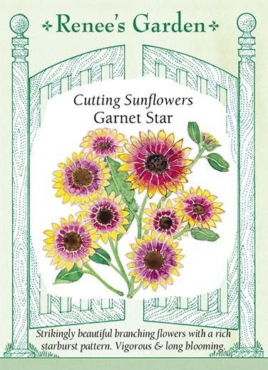 sunflower-cutting-sunflowers-garner-star-renees-garden