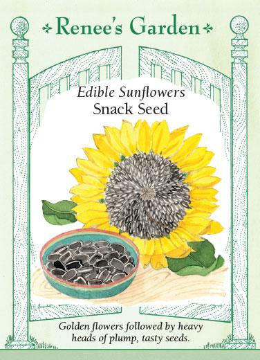 sunflower-edible-sunflowers-snack-seed-renees-garden