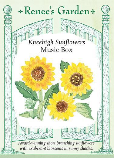 sunflower-kneehigh-sunflowers-music-box-renees-garden