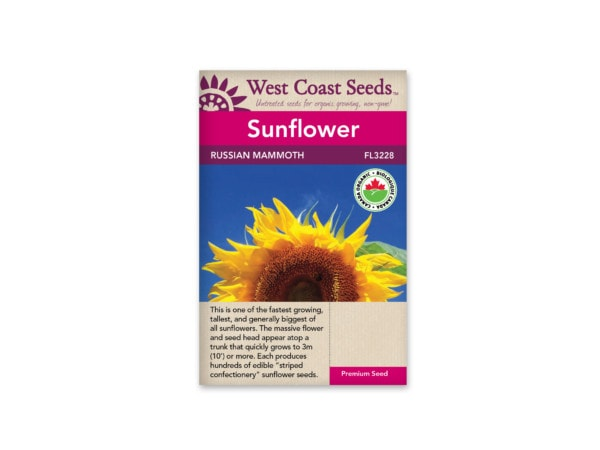 sunflower-russian-mammoth-west-coast-seeds