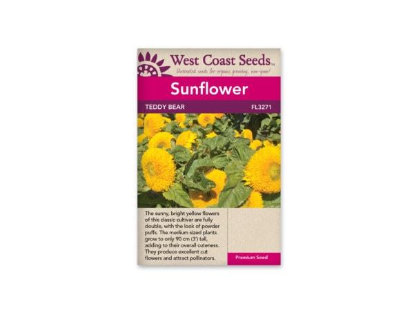 sunflower-teddy-bear-west-coast-seeds