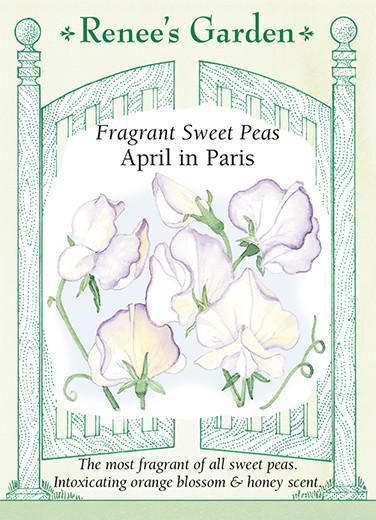 sweet-pea-april-in-paris-renees-garden